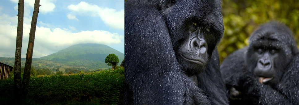gorilla-and-bisoke-view