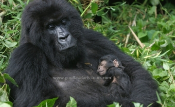 4 Days Rwanda Tour: Gorilla & Golden Monkeys Safari