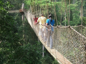 Canopy walk in Nyungwe Forest National Park