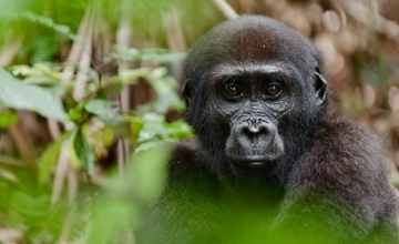 2 Days Gorilla Trekking Tour