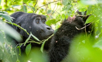3 days gorilla trekking tour