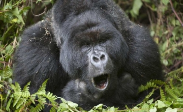 8 Days Gorilla Tracking Safari in Rwanda and Uganda