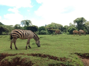 Wildlife Mount Elgon National Park