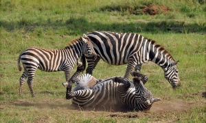kidepo national park wildlife