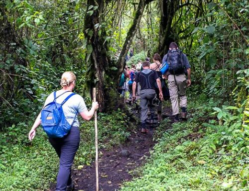 Adventure Rwanda's Mount Bisoke in just a day- Rwanda hiking safaris