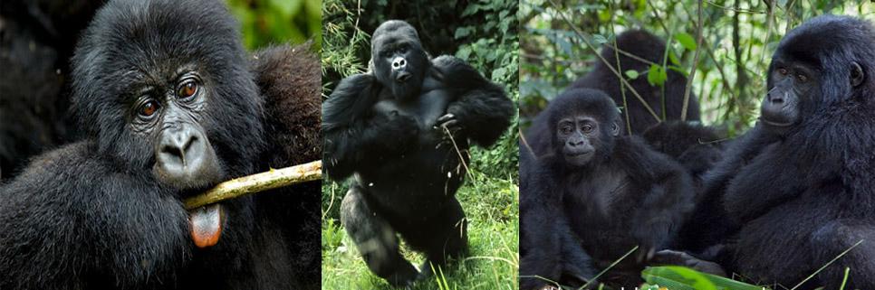 8-days-rwanda-gorilla-safaris
