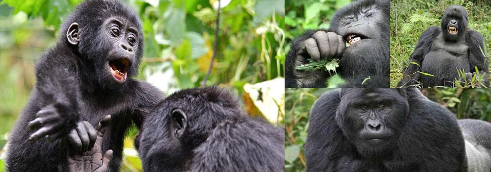 rwanda-3-day-gorilla-trekking-safari