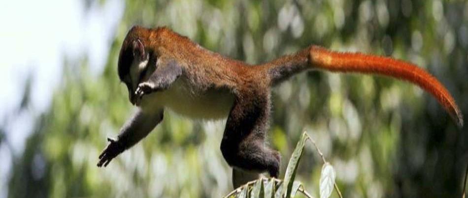 virunga-vlcanoes-national-park-rwanda