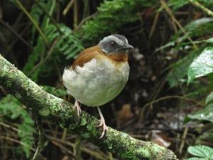 Birding Africa Uganda Tour