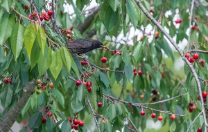 Birds in akagera national park