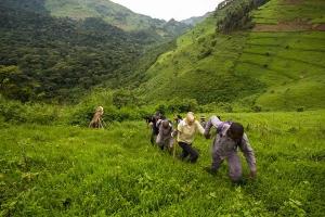 Easiest Gorilla Family to Trek