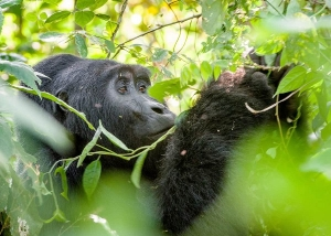 3 days gorilla trekking tour