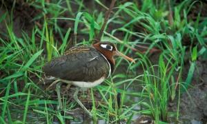 Lake Mburo National Park Birds