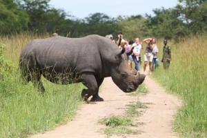 Rhino tracking uganda