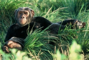 7 Days Uganda Gorilla, Chimpanzee & Wildlife Safari