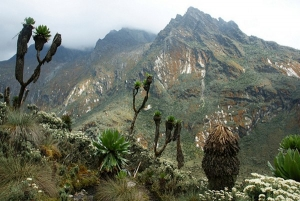 Vegetation Mount Rwenzori