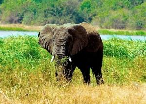 Wild Animals in akagera national park
