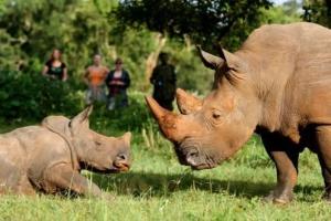 Wildlife Mount Rwenzori