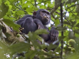 Wildlife in Nyungwe Forest National Park