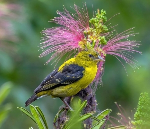 birds in Mgahinga