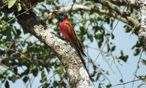 kidepo national park birding