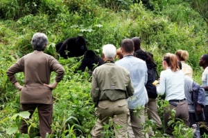 How to Know the Best Time for Rwanda Gorilla Trekking Safaris -Rwanda Safari News